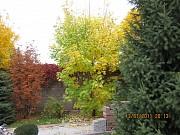 Сосны, елки и другие саженцы. Посадка. Озеленение. Алматы