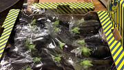 Продаем баклажаны из Испании Алматы