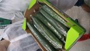 Продаем огурцы из Испании Алматы
