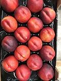 Продаем нектарин из Испании Алматы