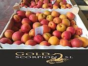 Продаем абрикосы из Испании Алматы