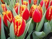 Тюльпаны на 8 Марта Алматы