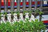 Роботизированная машина по пересадке растений URBINATI