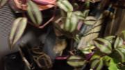 Цветы комнатные Костанай