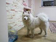 Гостиница для собак happydogs.kz Алматы