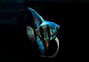 Изготовление морских и пресноводных аквариумов Алматы