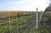 Сетка шарнирная- Чабанка - высота 1, 4 м Алматы