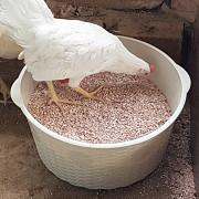 Кальций пещивой для птиц и животных Актау