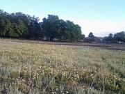 Продажа земли, 10000 соток Алматы