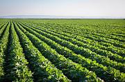 Продаем большим оптом 500000 тысяч тонн пшеницу 2019-2025 года Алматы
