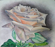 Роза царица цветов Алматы
