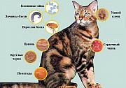 Приборы для лечения собак и кошек Алматы