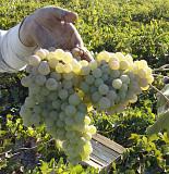Виноградное хозяйство За границей