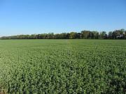Семена кормовых трав, житняк, люцерна, суданка, сорго доставка из г.Нур-Султан (Астана)