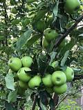 Яблоневый сад 2 га в с.азат Алматы