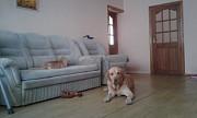 Зоогостиница для собак и кошек Алматы