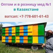 Пчелопродукция с пасек Исмаила в Казахстане, ватсап: +77786016143 Кокшетау