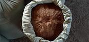 Рыбная мука Шымкент