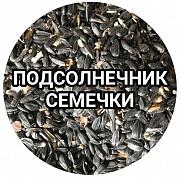 Подсолнечник куплю Шымкент