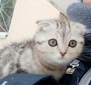 Пропала кошка Уральск