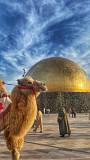 Туры, экскурсии, Туркестан, Шымкент, Тараз Туркестанская область
