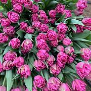 Тюльпаны оптом к 8 марта Алматы